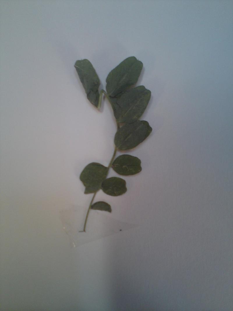 Mon herbier mystérieux Dsc00616