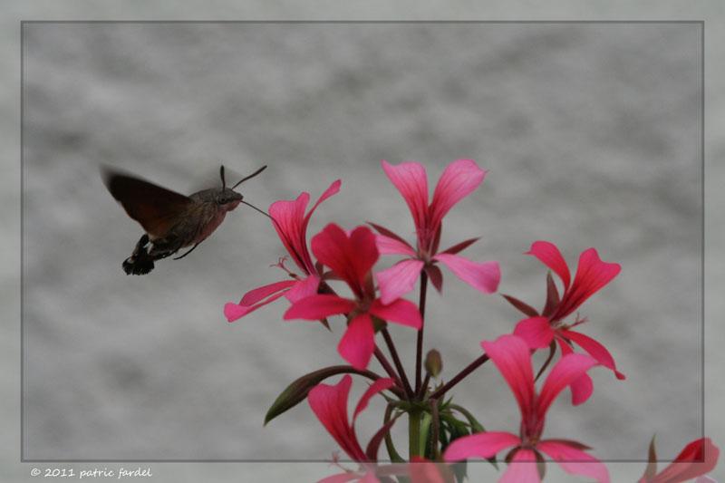 Shoot en vrac Insect10