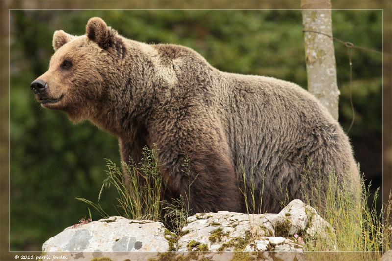 Juraparc au Mont d'Orseires L_ours12