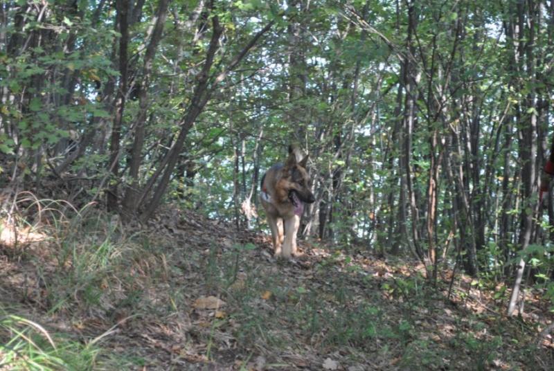 esercitazione di protezione civile -9 ottobre 2010 pianello Dsc_0112