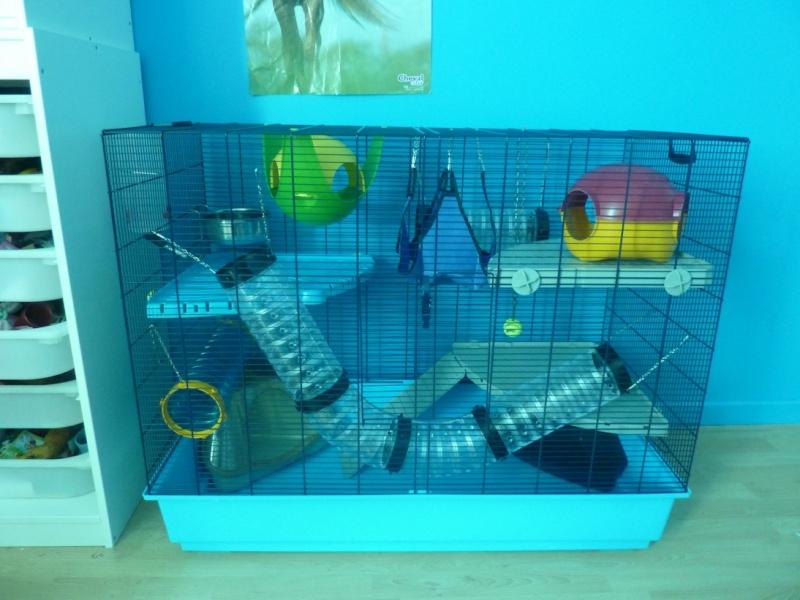 cherche cage pour 2 rats P1010034