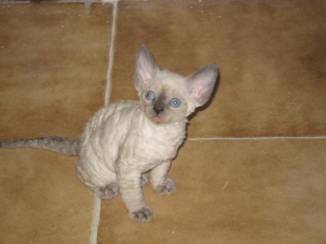 Les chats de Mounette Babas_10