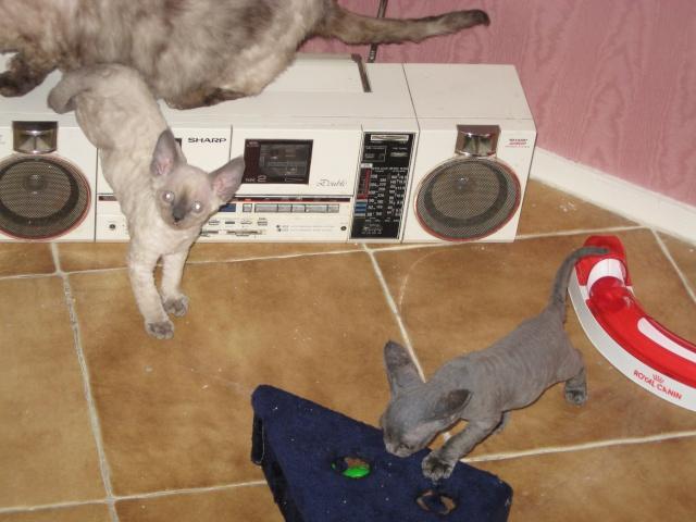 Les chats de Mounette Babas_11