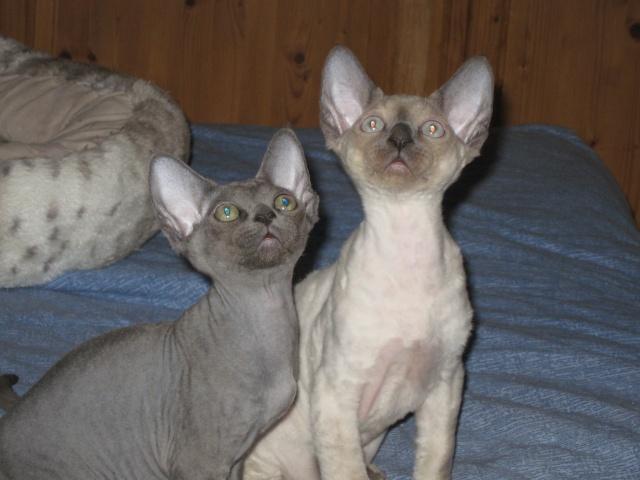 Les chats de Mounette Babas_13