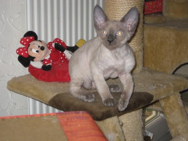 Les chats de Mounette Babas_14