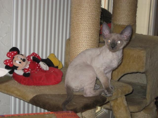 Les chats de Mounette Babas_15