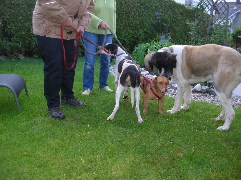 Nouvelles des chiens partis le 9 mai pour l'allemagne et l'autriche Dscn5611