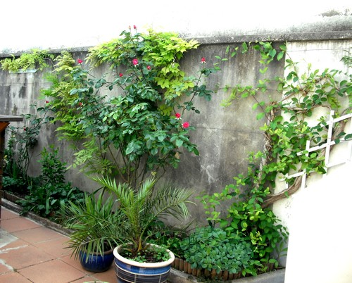 jardin de printemps Droit10