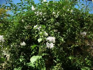 jardin de printemps Solanu10