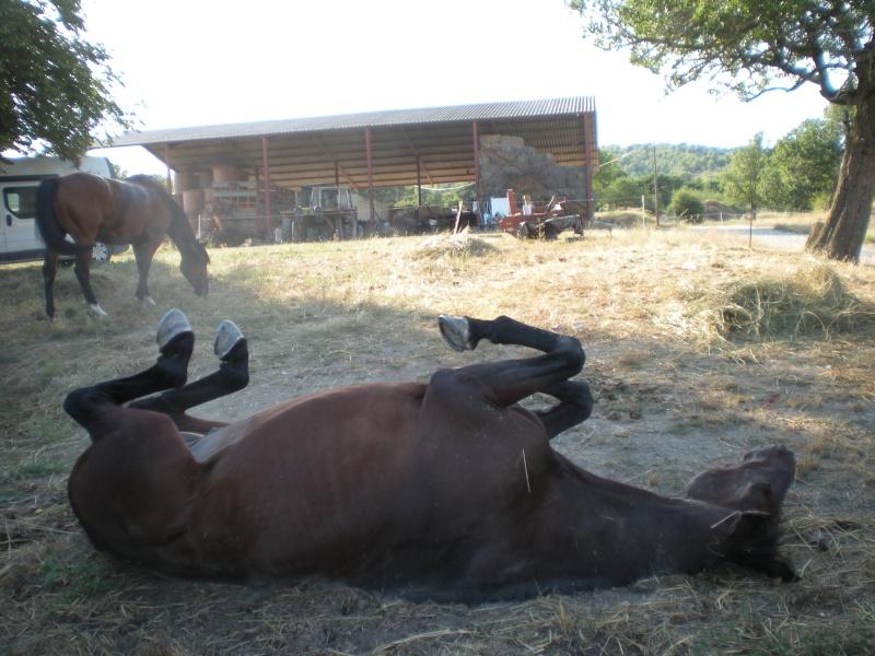 [CR] 6 jours dans le vercors 31/07 au 05/08/2010 Vacanc25