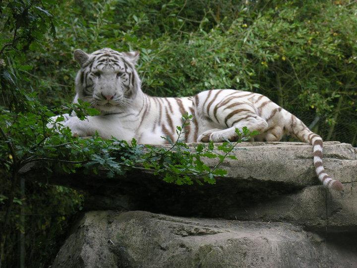 Actu dans les zoos 62061_10