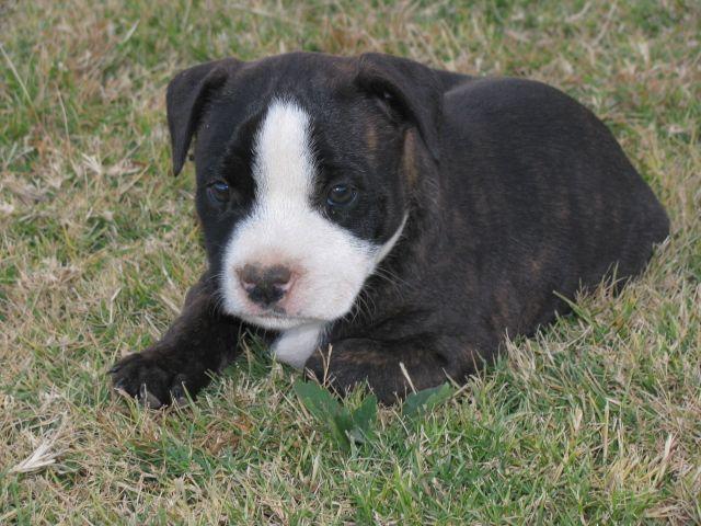 hello  Pup10