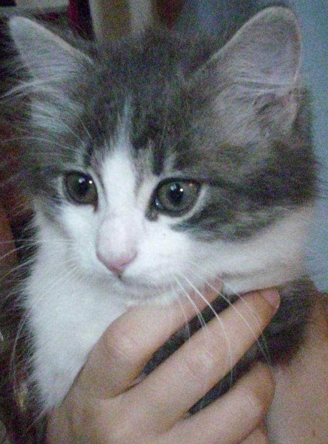 Petit chat à adopter Dsci5934