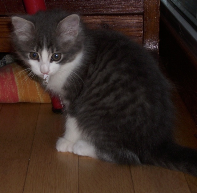 Petit chat à adopter Dsci5935