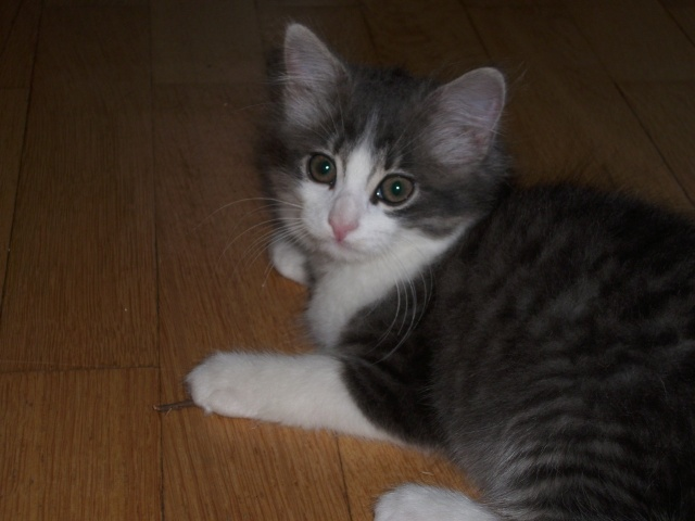 Petit chat à adopter Dsci5936