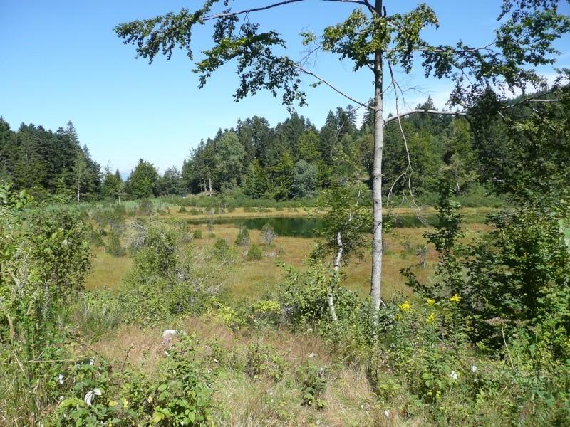 lac de Luitel P1030610