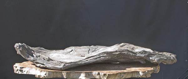 my new work - atelier bonsai Element Psc_0810