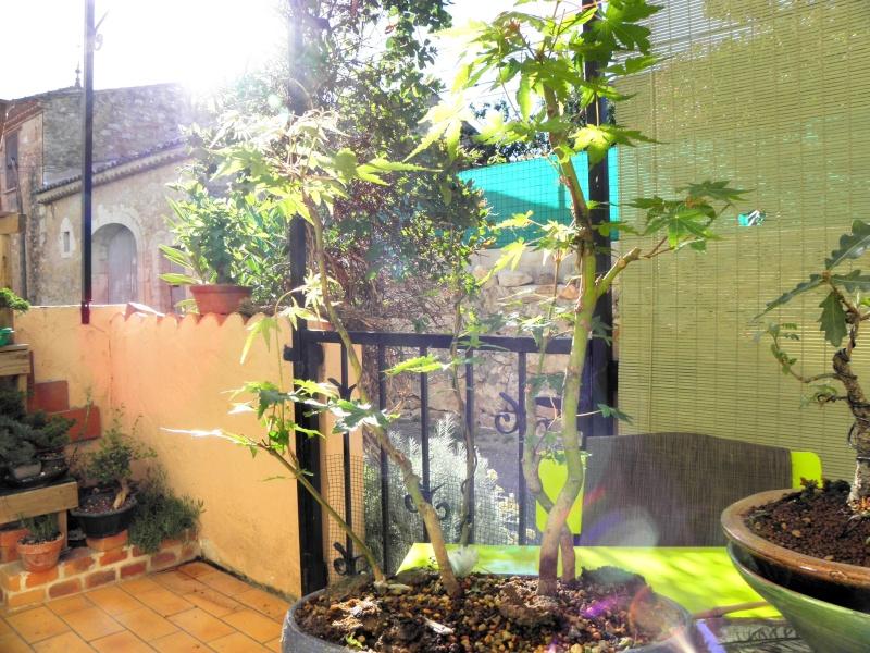 le soleil et le vent !!!l'érable n'aime pas P6250011