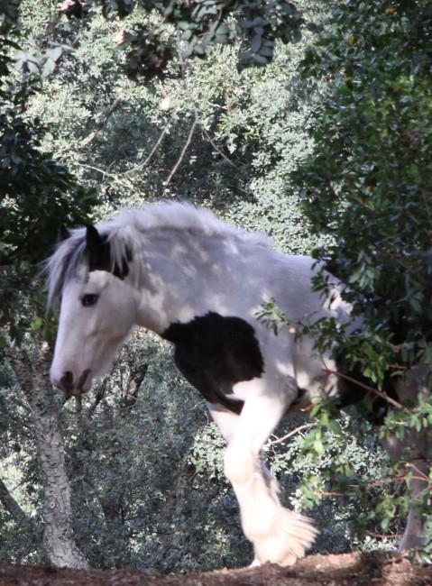 Vyrone au Vallon de la Mourre, NEWS P.2 2010_112