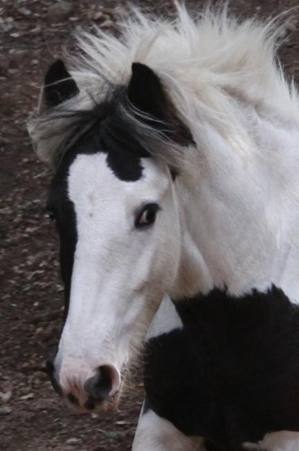Vyrone au Vallon de la Mourre, NEWS P.2 2010_116