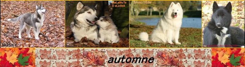 mes montages,bannieres,anniversaires,saisons,fete ...  Automn11