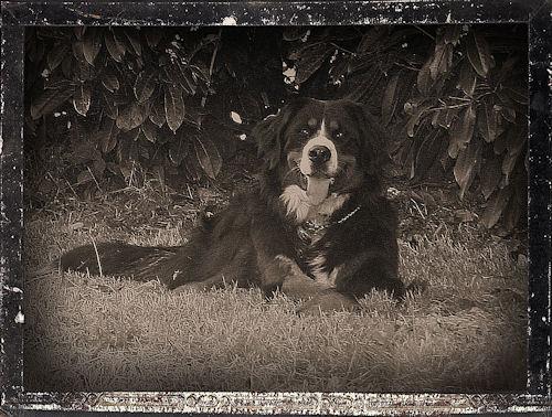 ♥♥♥ Mes adorables toutous... photos de complicité avec mes chiens de prairie... ♥♥♥ - Page 2 2010_013