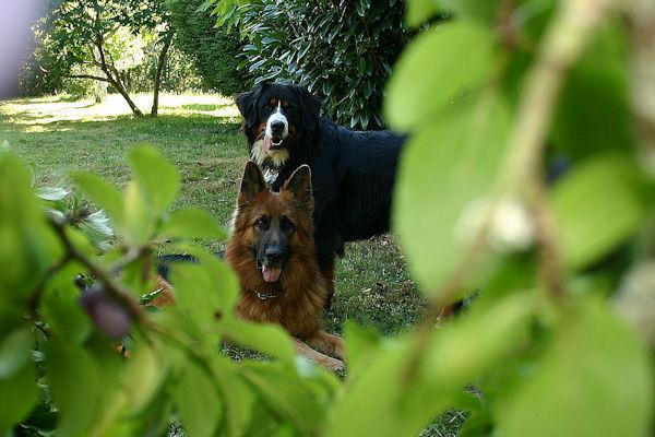 ♥♥♥ Mes adorables toutous... photos de complicité avec mes chiens de prairie... ♥♥♥ - Page 2 2010_014