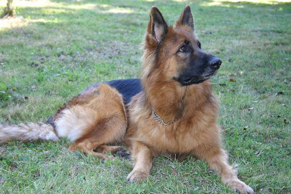 ♥♥♥ Mes adorables toutous... photos de complicité avec mes chiens de prairie... ♥♥♥ - Page 2 2010_017