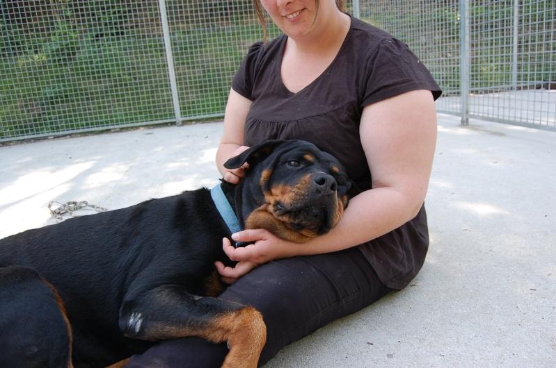 Roxanne, rott 5 ans en total délaissement (Oise) Dsc_0546