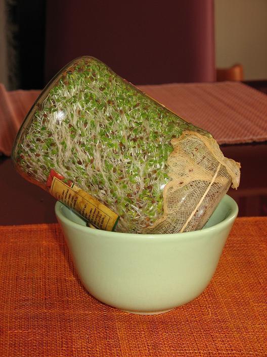 les graines germés ...... - Page 4 Graine10