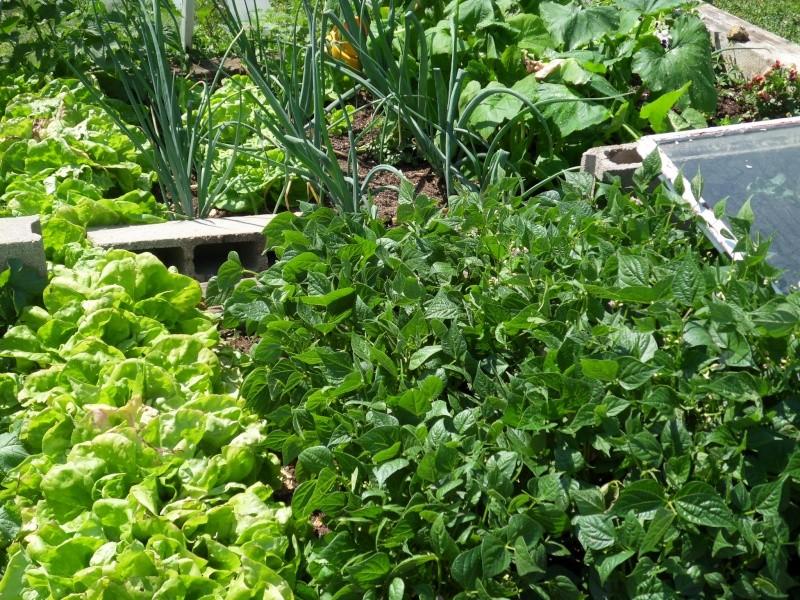 vos jardins  vos plantes - Page 14 Sdc11517