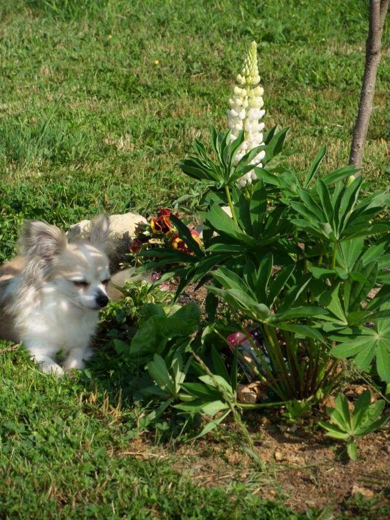 vos jardins  vos plantes - Page 14 Sdc11613