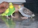 P'tite grise qui manque des plumes...ne poussent pas vites! - Page 2 100_2123