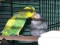 P'tite grise qui manque des plumes...ne poussent pas vites! - Page 2 100_2124