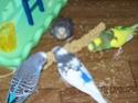 P'tite grise qui manque des plumes...ne poussent pas vites! - Page 2 100_2210