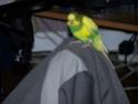 P'tite grise qui manque des plumes...ne poussent pas vites! - Page 2 100_2214