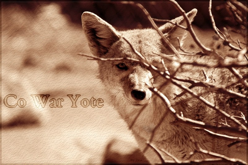 Co War Yote