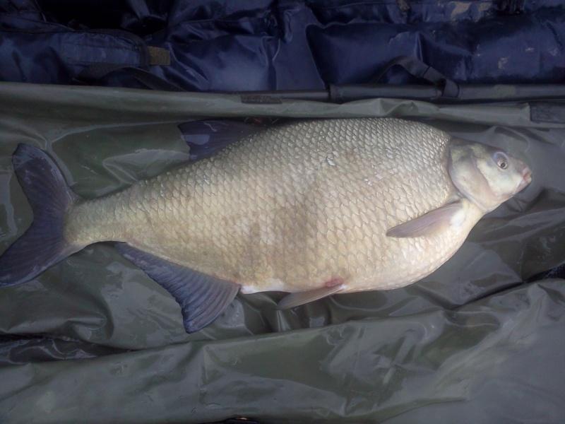 Quelle poisson vous a marquez le plus durant cette année 2011 ? - Page 2 Img20125