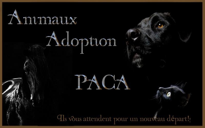 Animaux Adoption PACA