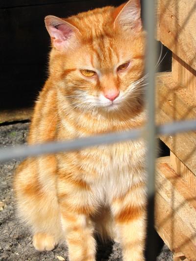 Photos de quelques chats Img_4510