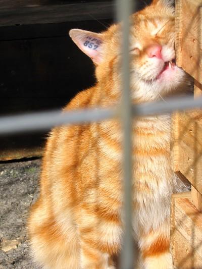 Photos de quelques chats Img_4511