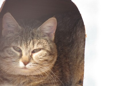 Photos de quelques chats Img_4513