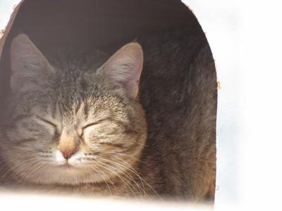 Photos de quelques chats Img_4514
