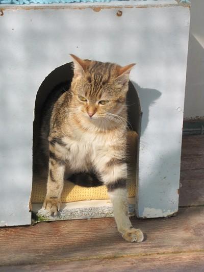 Photos de quelques chats Img_4515