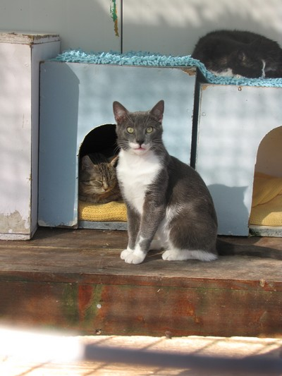 Photos de quelques chats Img_4516