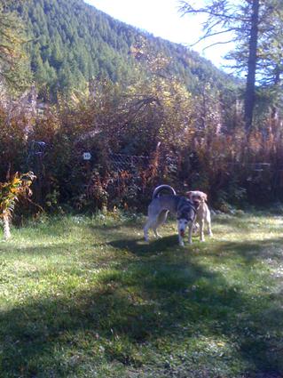 Mira femelle husky lof adoptée: peut on avoir des nouvelles ? Jeux10