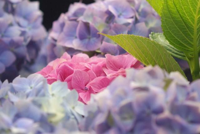 Une fleur qui n'est pas à sa place Imgp6313