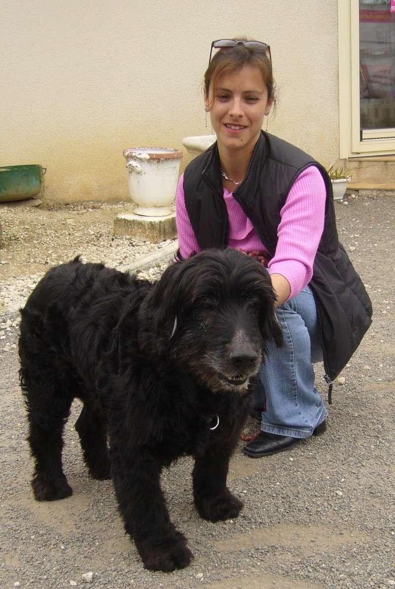 Adopter un chien âgé P1080310