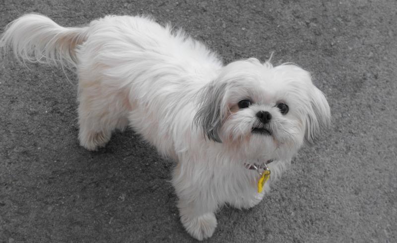 Votre animal de compagnie  favorit ... Lily1a10
