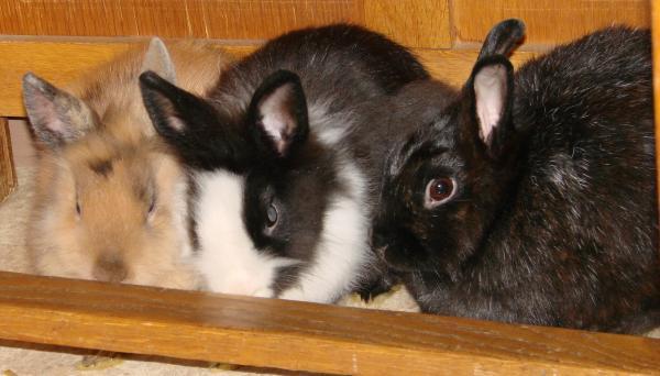 Chipie et Praline, lapines de 3 mois Img_1210